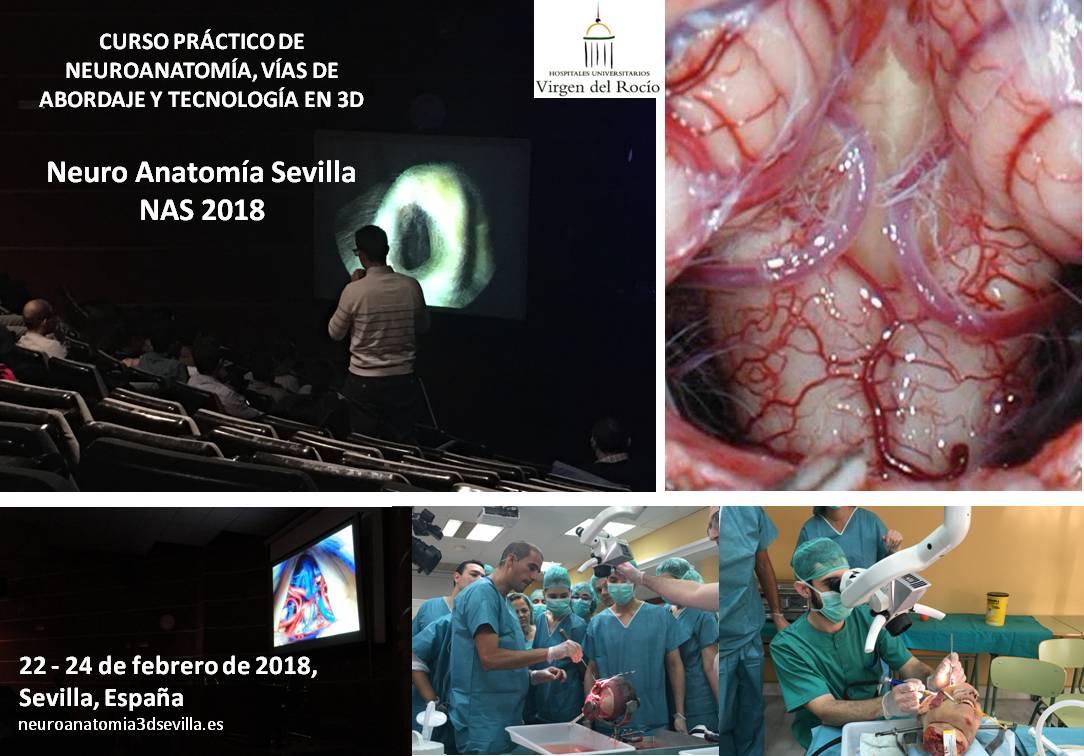 Único Las Vías Anatómicas Cursos Componente - Imágenes de Anatomía ...